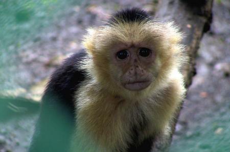 Un mono muy triste